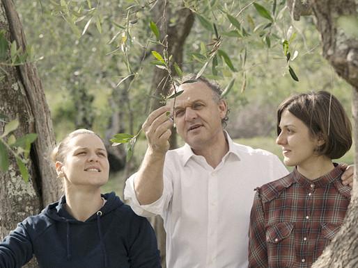 La tradizione ligure dell'olio di oliva continua, di padre in figlia