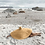 Thumbnail: 1m Wide Very Large Straw Hat