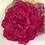"Thumbnail: Patsie - Large Silk 17cm (7"") Millinery Peony Flower Hat Mount - 2 Colours!"