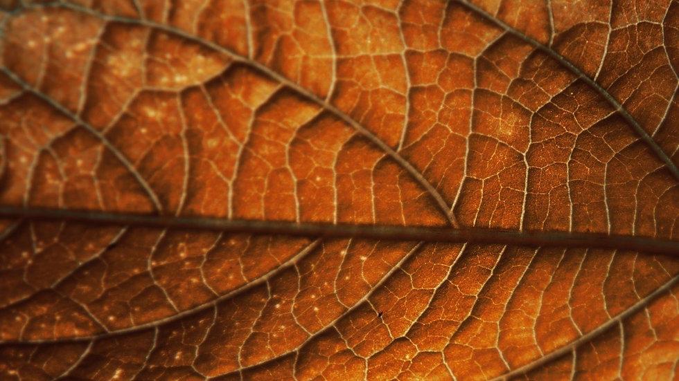 dry-leaf-wide-wallpaper-28637_edited.jpg