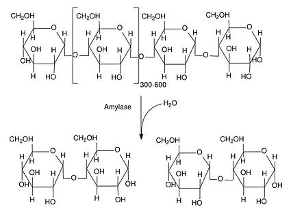 Amylose Reaction.png