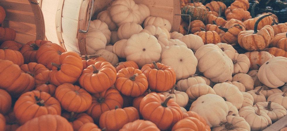 many-mini-pumpkins-15083269033DR.jpg