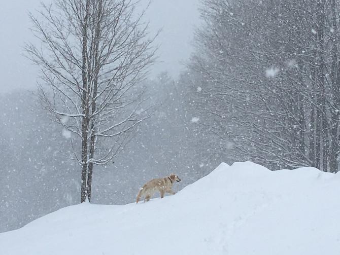 Rewild Your New Year, Winter