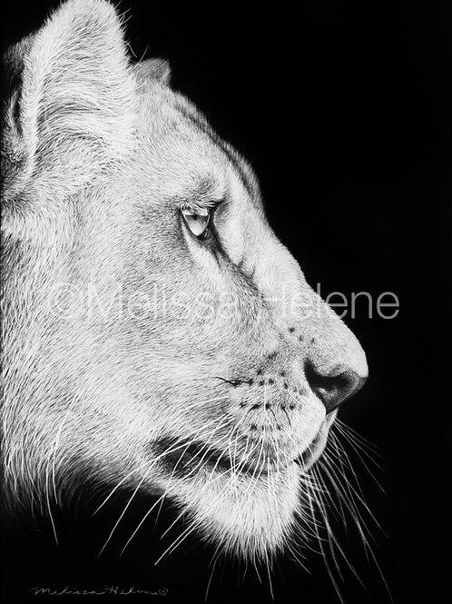 "African Lioness   Original   7""x5"""