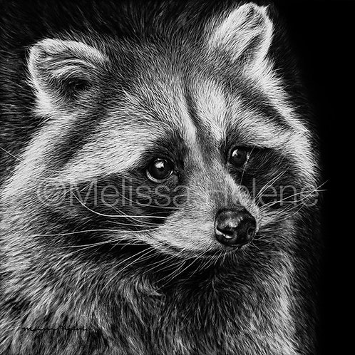 "Raccoon | Original | 8""x8"""