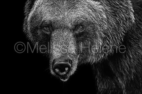 "Grizzly Bear   Original   4""x6"""