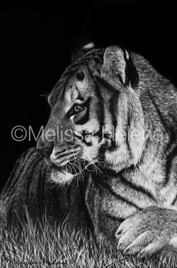 Tiger 6 (wm)