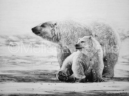 Polar Bears | Reproduction