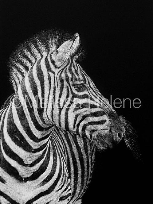 Zebra | Reproduction