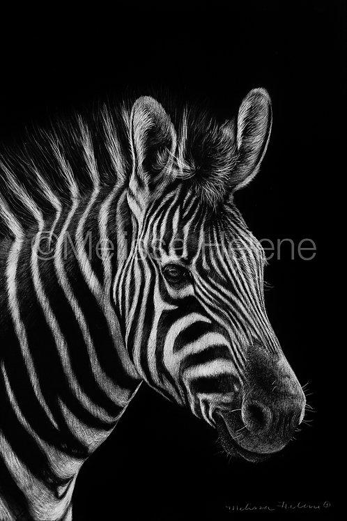 """Zebra   Original   6""""x4"""""""