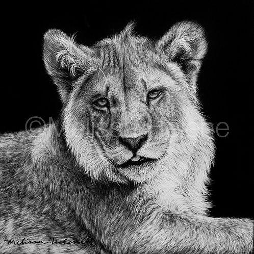 "African Lion Cub | Original | 4""x4"""