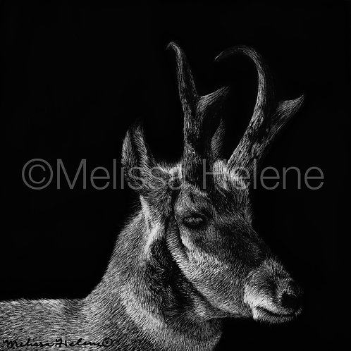 "Pronghorn | Original | 4""x4"""