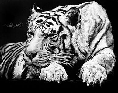Tiger%20Sleeping%20(wm)_edited.jpg