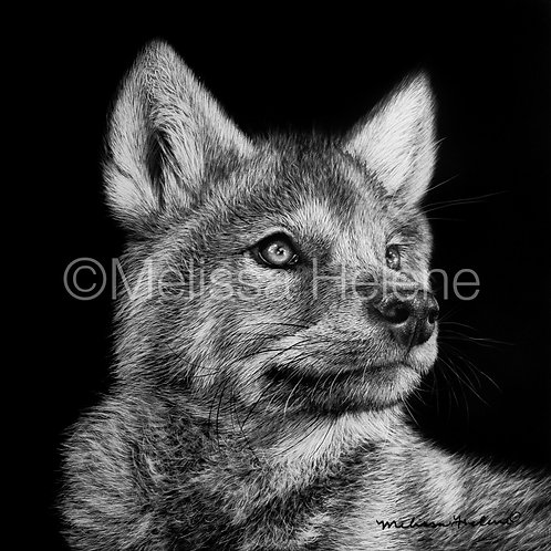Wolf Pup | Reproduction