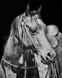 Horse (wm)