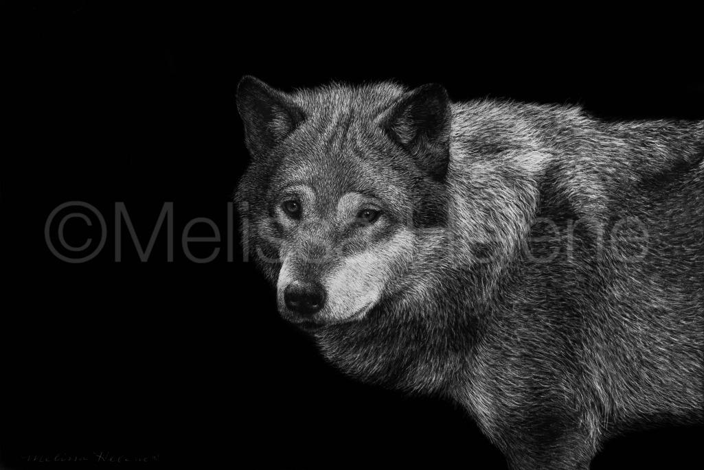 Wolf 11 (wm)