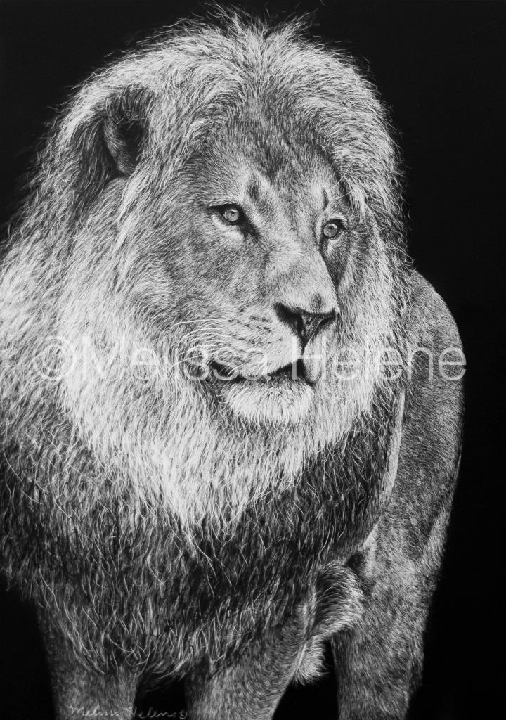 Lion 4 (wm)
