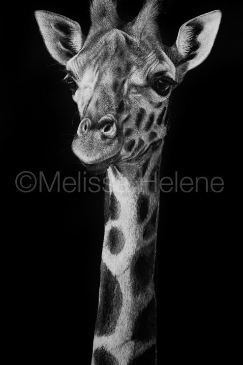 Giraffe 02 | Reproduction
