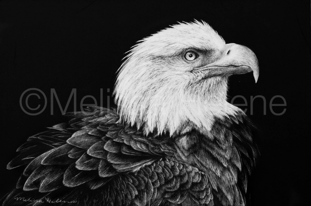 Bird - Bald Eagle 5 (wm)