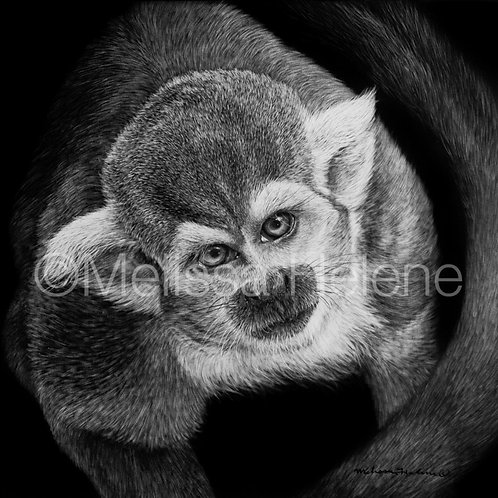 Squirrel Monkey | Reproduction