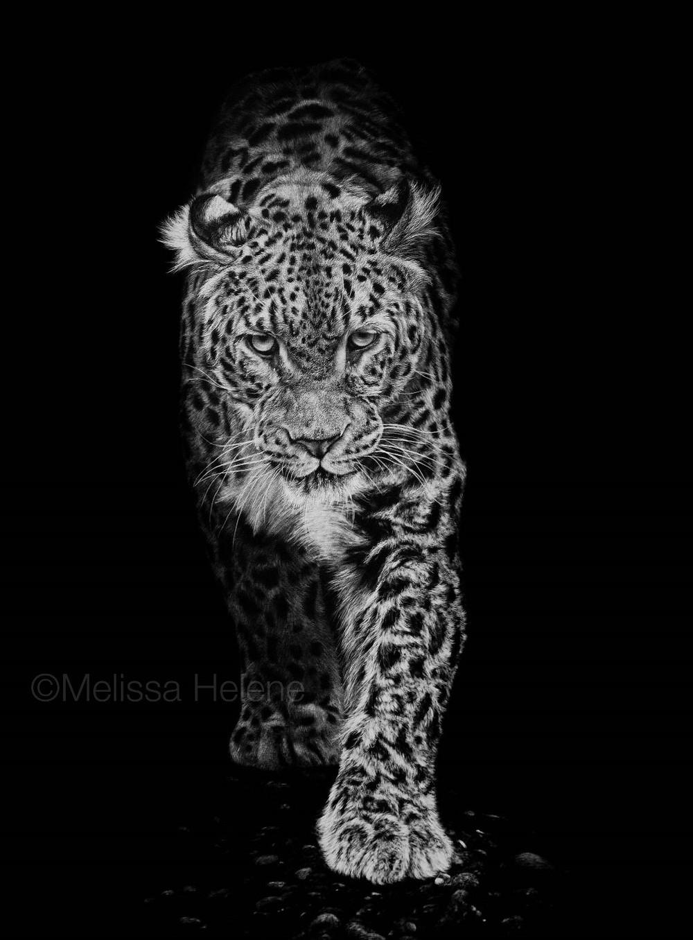 Amur Leopard (wm).jpg