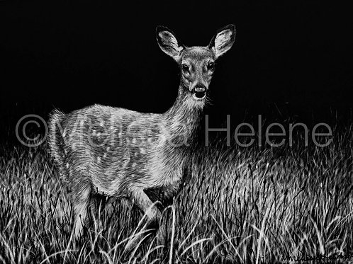 "White-Tailed Deer Fawn | Original | 5""x7"""