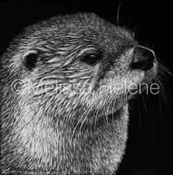 Otter 4 (wm)
