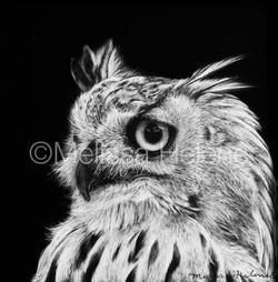 Bird - Owl, Eagle 3 (wm)