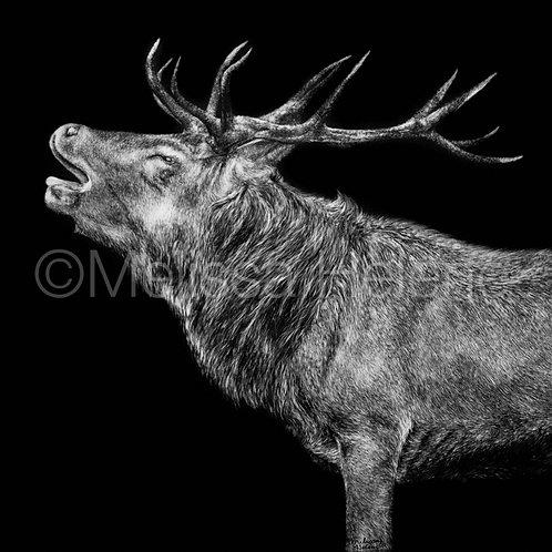 "Elk | Original | 12""x12"""