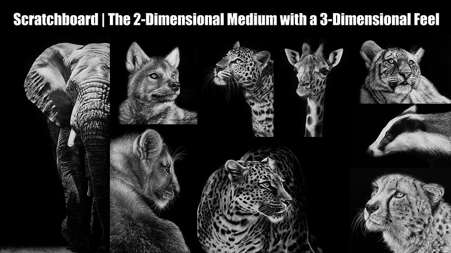 Scratcboard wildife artwork, black and white artwork, scratchboard, animal art, Melissa Helene Fine Arts, elephant, wolf, lion, leopard, giraffe, tiger, badger, cheetah, Melissa Helene, Wisconsin Scratchboard Artist
