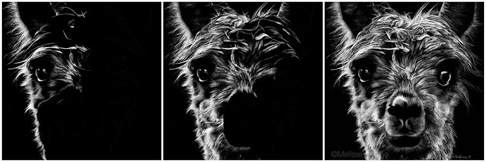 Alpaca WIP.jpg