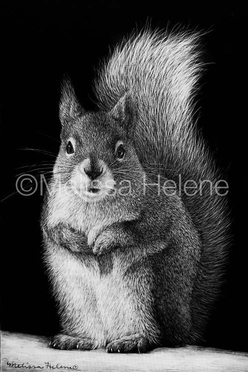 Squirrel | Reproduction
