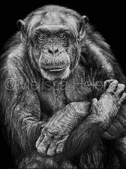 Our Wild Brother - Chimpanzee | Reproduction
