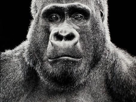 Mountain Gorilla | Endangered Species Series