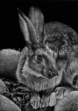 Hare (wm)