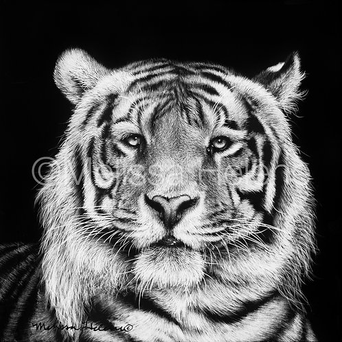 "Tiger | Original | 4""x4"""