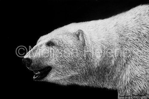 "Polar Bear   Original   4""x6"""