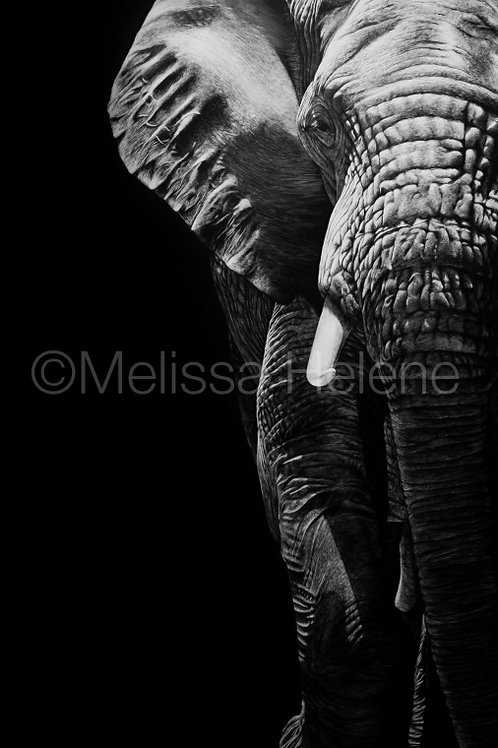 "African Elephant   Original   20""x10"""