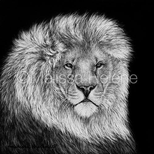 "African Lion   Original   4""x4"""