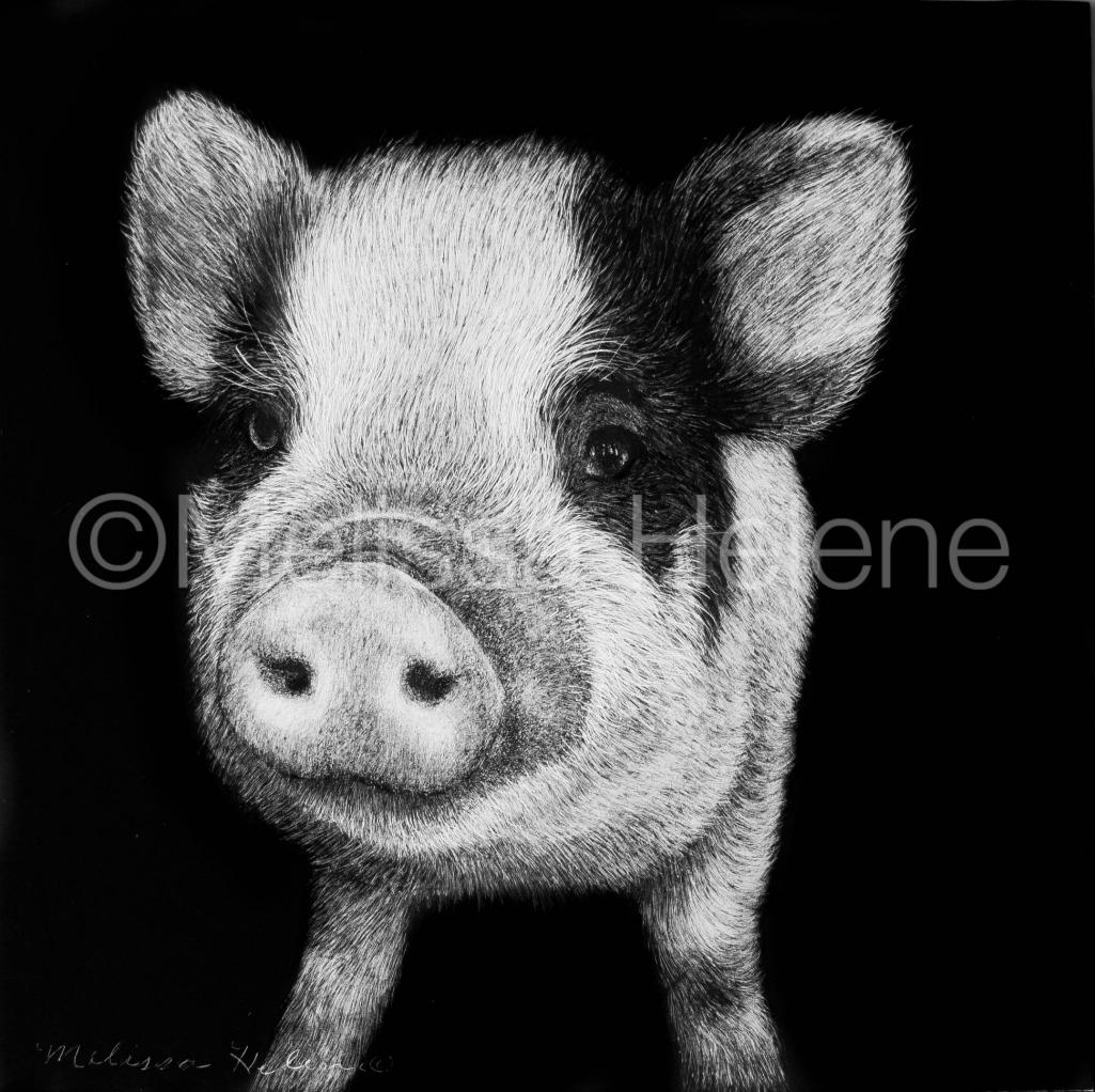 Pig 2 (wm)