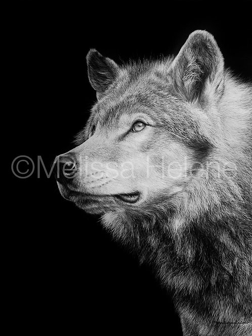 Timberwolf | Reproduction