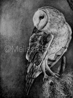 Bird - Owl, Barn 2 (wm)