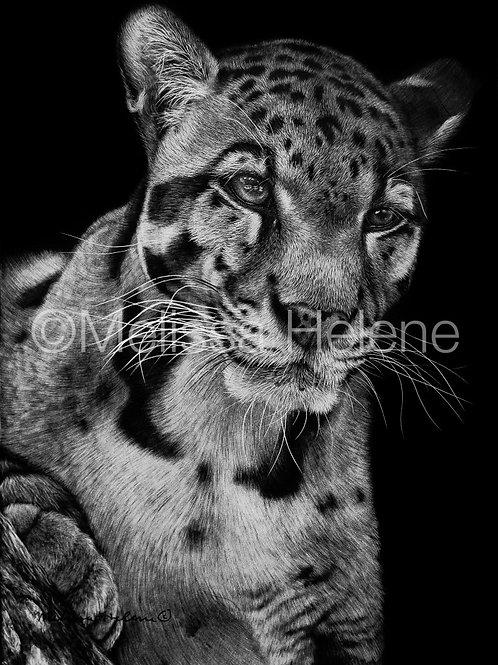 "Clouded Leopard   Original   7""x5"""
