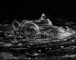 Hippo (wm)