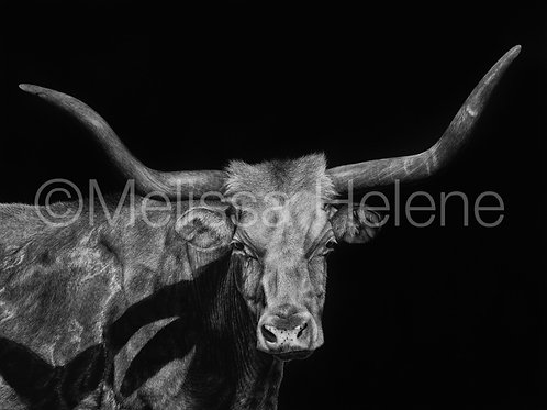 Longhorn | Reproduction