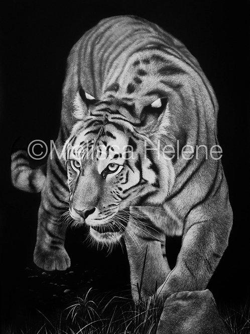 Tiger 02 | Reproduction