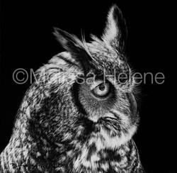 Bird - Owl, Great Horned (wm)