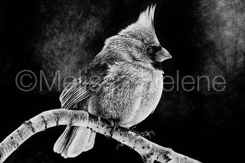 Cardinal | Reproduction