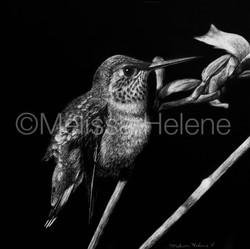 Bird - Hummingbird (wm)