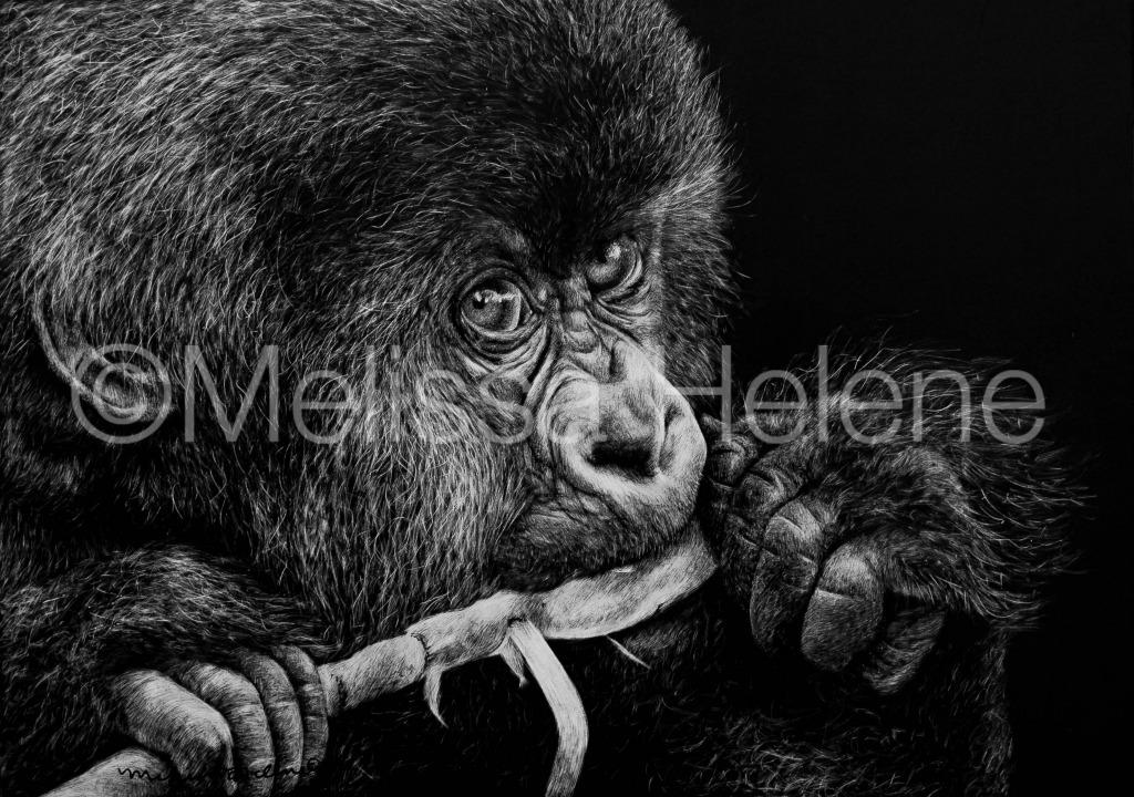 Gorilla baby (wm)